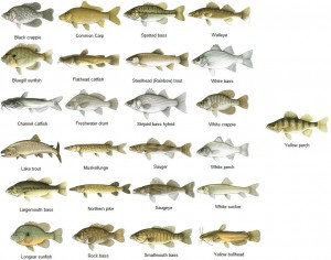 Alabama department of public health issues 2013 fish for Healthiest types of fish