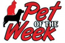 Pet-of-the-Week3colweb1-210x140